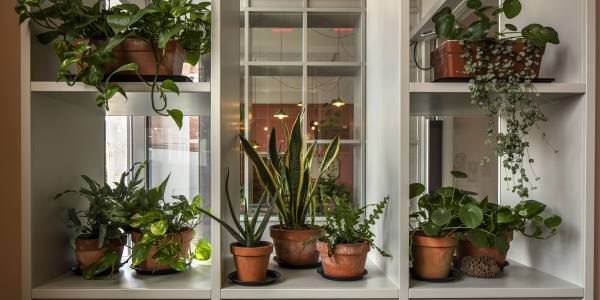 A grey shelf by the window to the entrance to the Scratch Hub. Plant pots are strewn on top with overhanging green leaves.